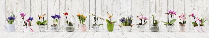 Flores em uns potenciômetros ajustados isolados no fundo de madeira branco, bandeira da Web com espaço da cópia para a loja de fl fotografia de stock royalty free