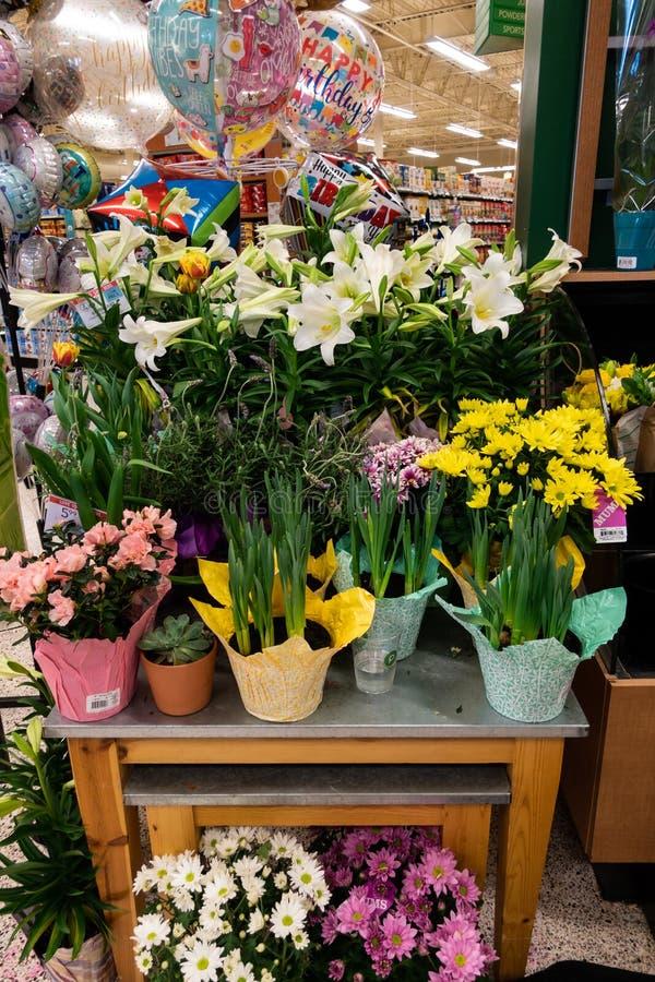 Flores em uns potenciômetros e em uns balões para a venda na mercearia i de Publix imagens de stock