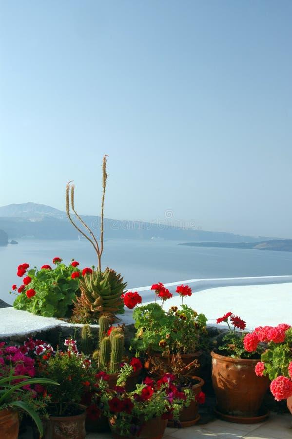 Flores em uns potenciômetros sobre o mar fotos de stock royalty free