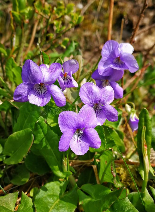 Flores en azul fotografía de archivo