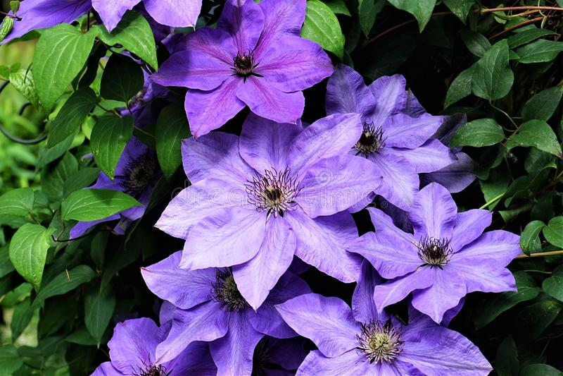 Flores en Bellevue en verano fotografía de archivo libre de regalías