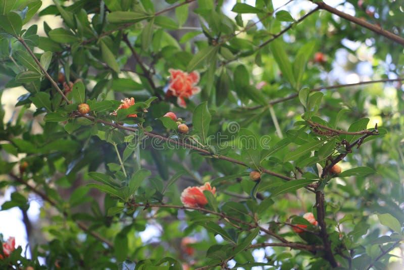 Flores en Bush verde foto de archivo
