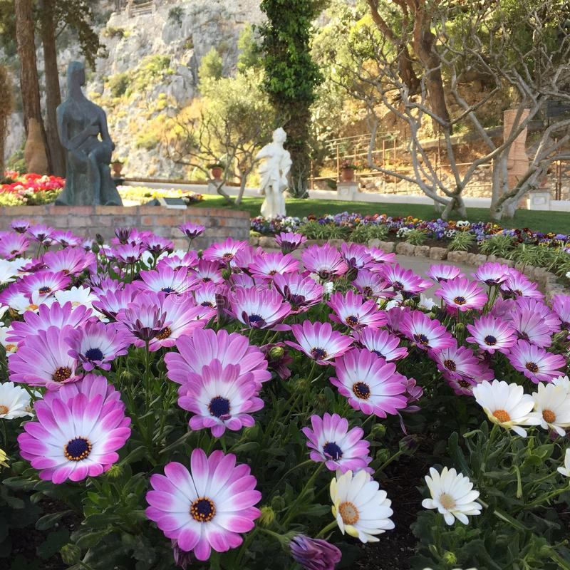 Flores en capri imagenes de archivo
