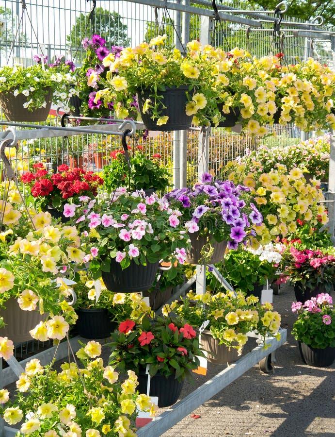 Flores en centro de jardín fotografía de archivo