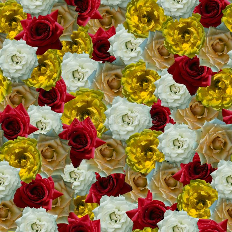 Flores en colores brillantes fotografía de archivo