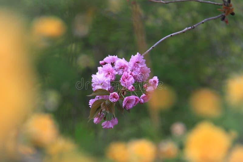 Flores en colores pastel imágenes de archivo libres de regalías