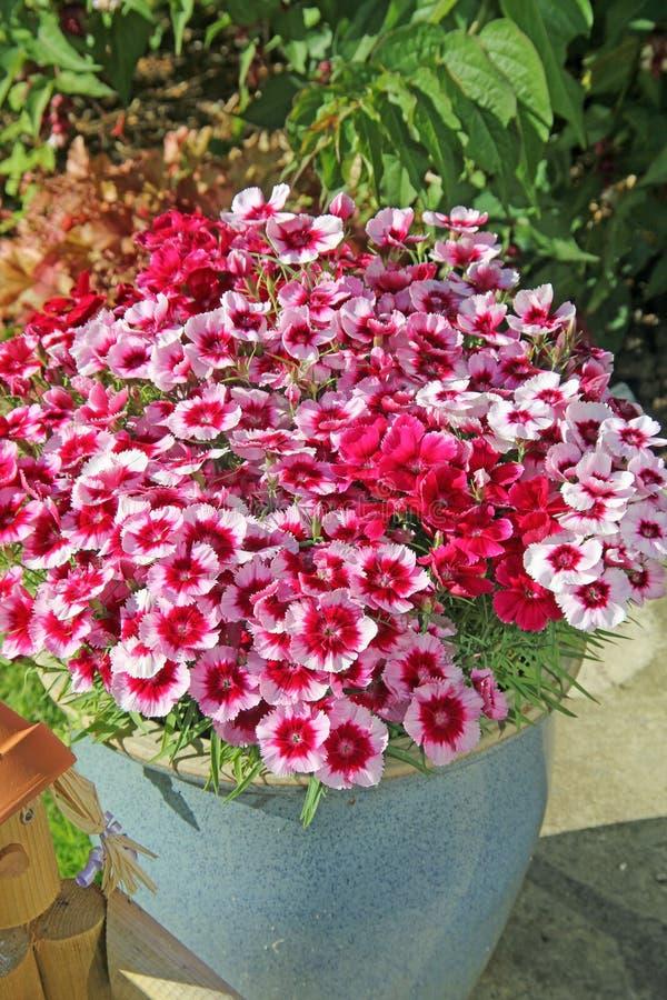 Download Flores en conserva rosadas imagen de archivo. Imagen de bastante - 41920965