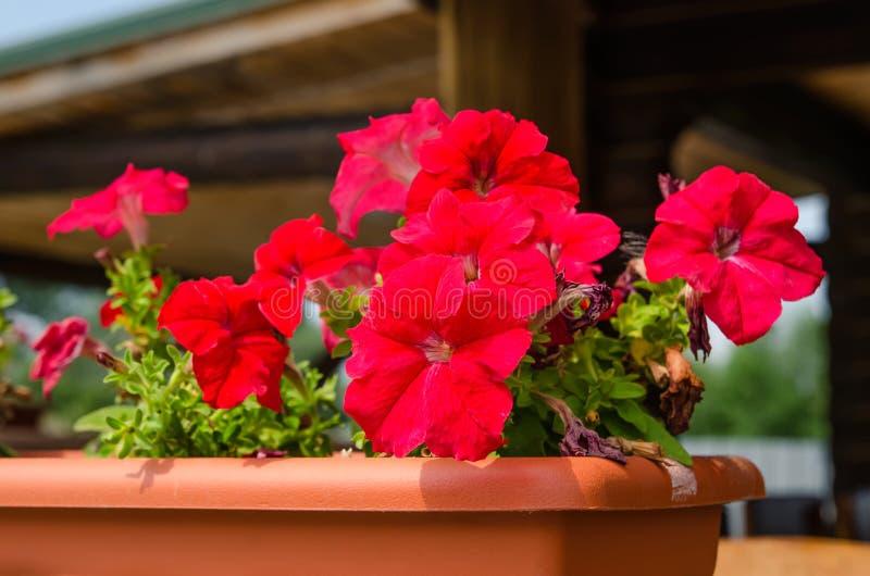 Flores en crisol fotografía de archivo
