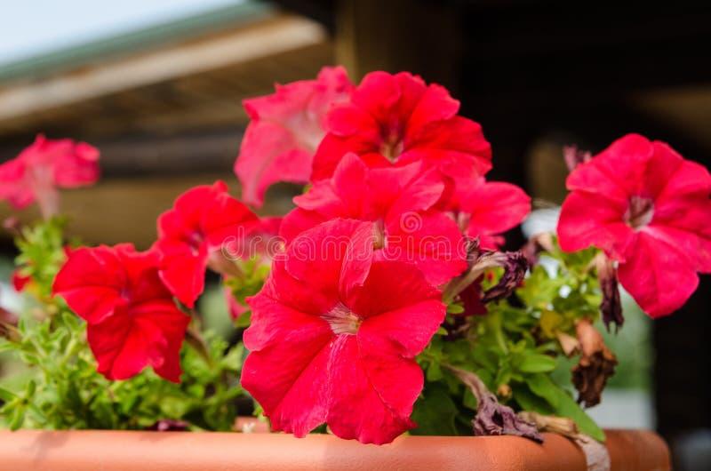 Flores en crisol imagen de archivo