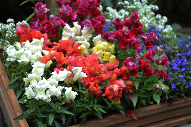 Flores en diversos colores florecidas en primavera imagenes de archivo