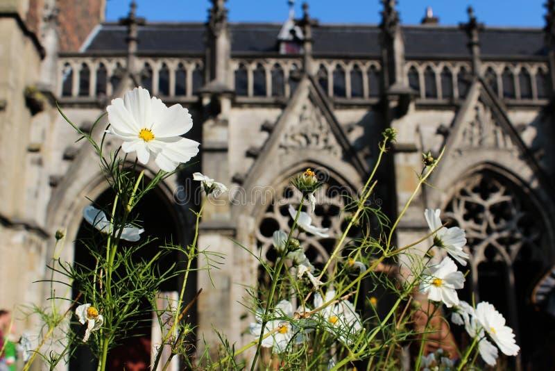 Flores en Dom Tower Garden (Utrecht - los Países Bajos) imágenes de archivo libres de regalías