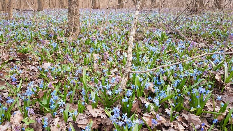 Flores en el bosque imagenes de archivo