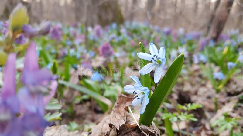 Flores en el bosque imágenes de archivo libres de regalías