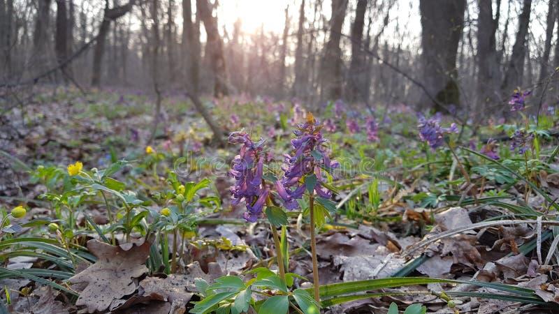 Flores en el bosque imagen de archivo libre de regalías