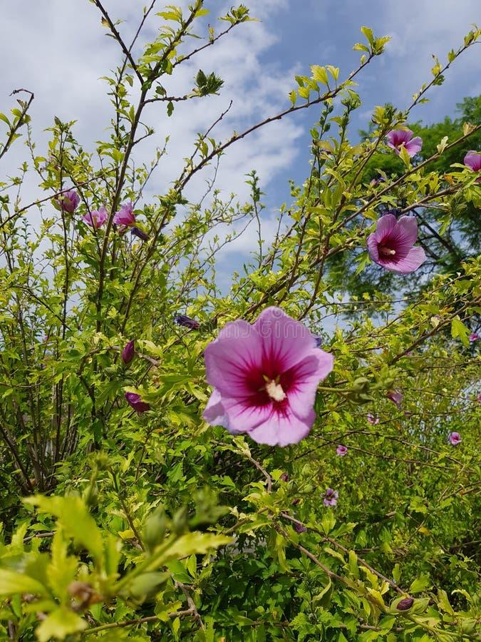 Flores en el bosque fotos de archivo libres de regalías