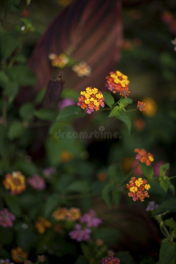 Flores en el campo foto de archivo libre de regalías