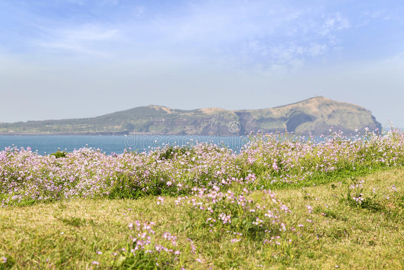 Flores en el frente, Udo Island en fondo imagen de archivo libre de regalías