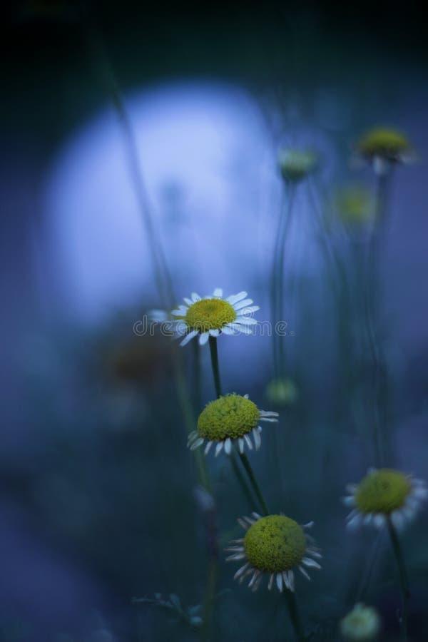 Flores en el jardín foto de archivo