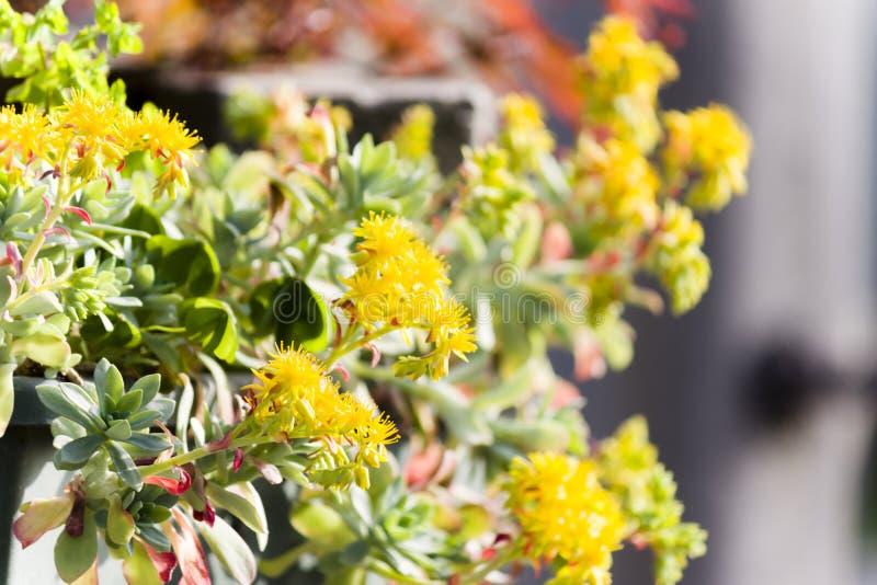 Flores en el jardín fotos de archivo