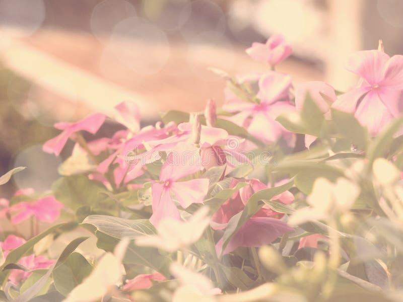 Flores en el jardín con color retro del efecto del filtro fotografía de archivo libre de regalías