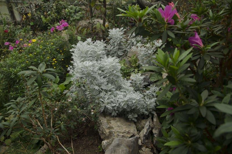 Flores en el jard?n imagenes de archivo