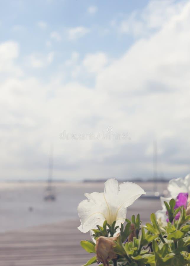 Flores en el puerto fotografía de archivo