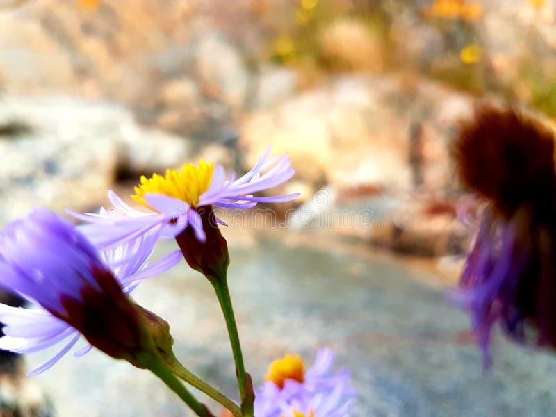 Flores en el salvaje fotos de archivo libres de regalías