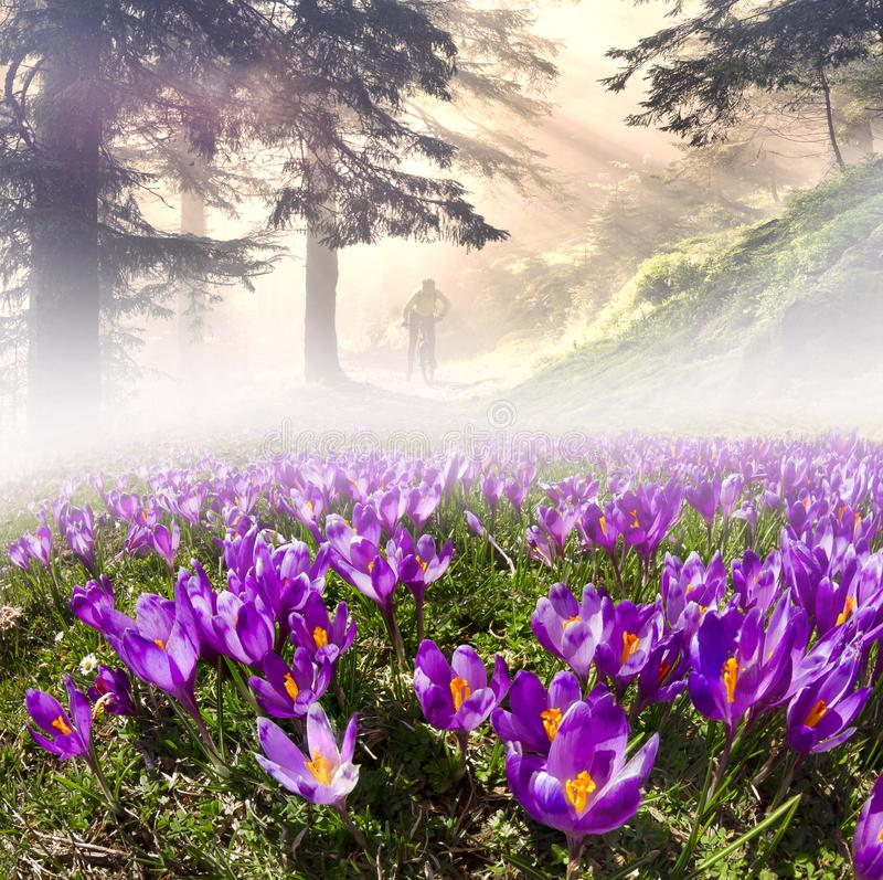 Flores en el sol foto de archivo