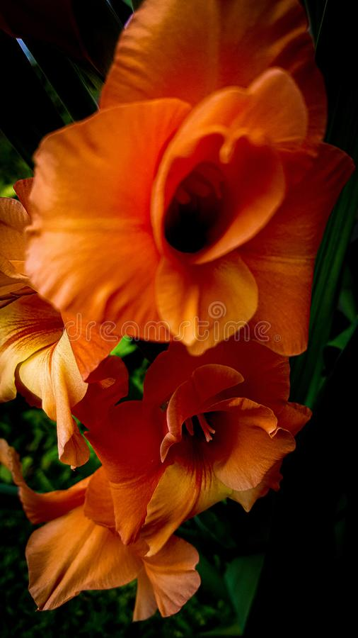 Flores en el tiempo de verano fotos de archivo libres de regalías