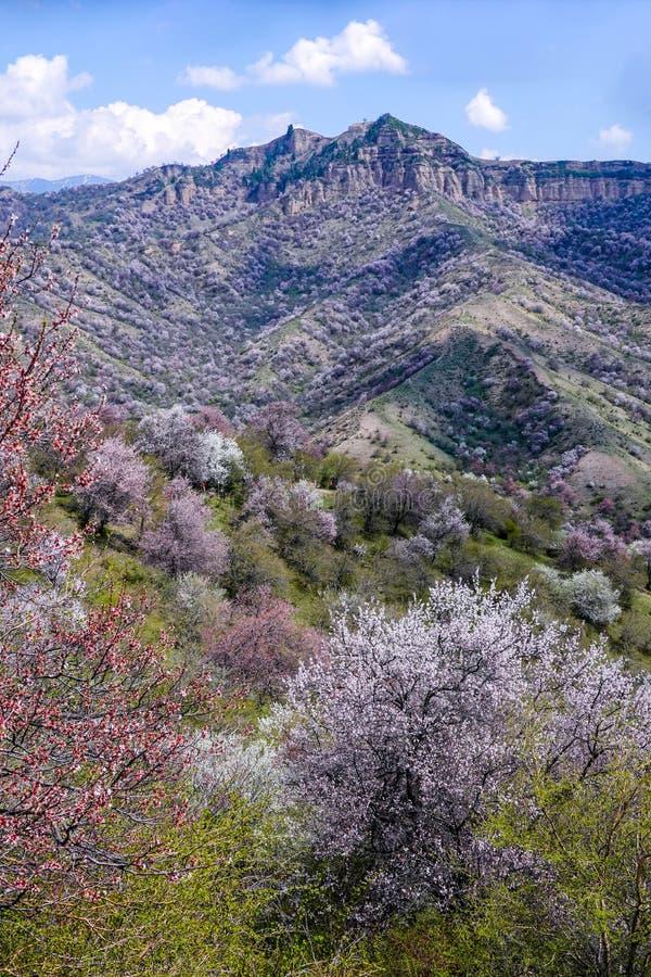 Flores en flor por toda la montaña foto de archivo