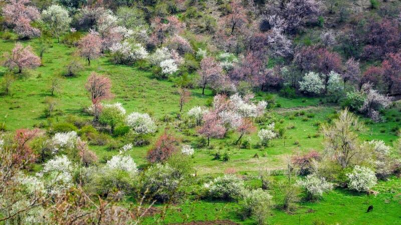 Flores en flor por toda la montaña fotos de archivo libres de regalías
