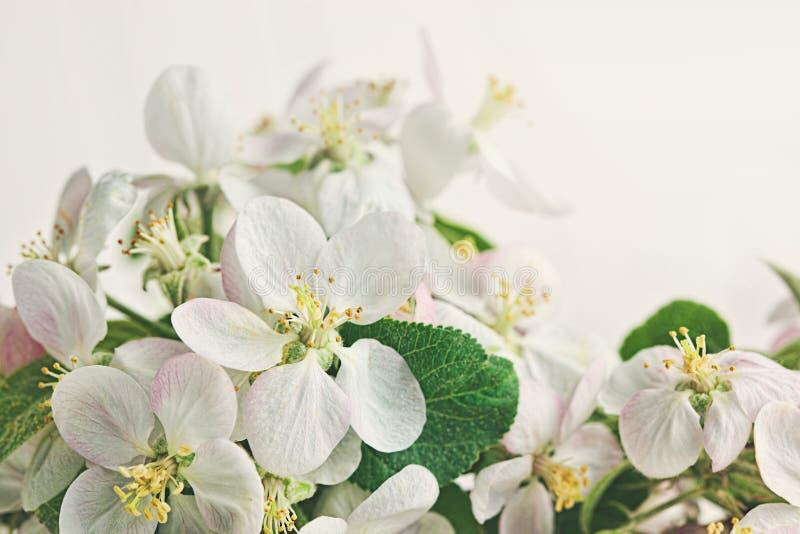 Flores en fondo blanco suave imagenes de archivo