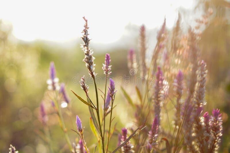 Flores en fondo borroso foto de archivo libre de regalías