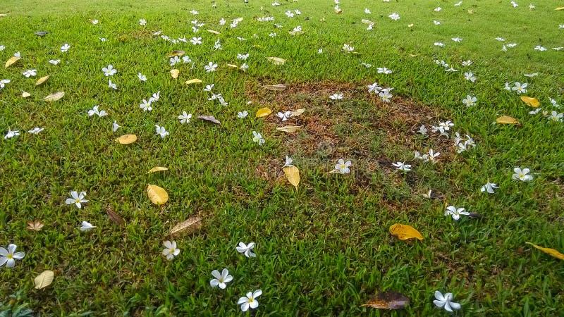 Flores en hierba verde imágenes de archivo libres de regalías