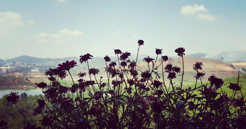 Flores en la ciudad de Dalat fotos de archivo