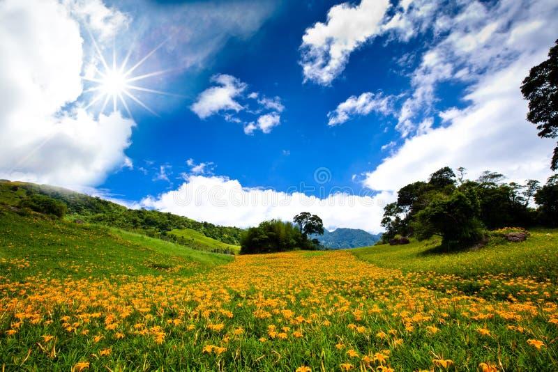 Flores en la montaña con el cielo asoleado imagenes de archivo