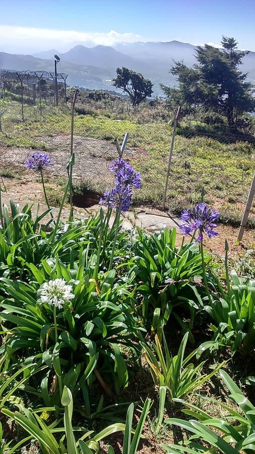 Flores en la montaña de PIduruthalagala imagen de archivo