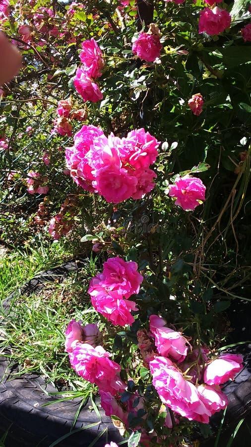 Flores en la montaña de PIduruthalagala fotografía de archivo