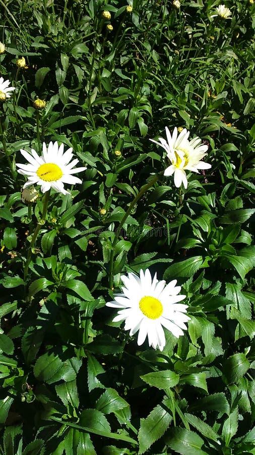 Flores en la montaña de PIduruthalagala imagenes de archivo