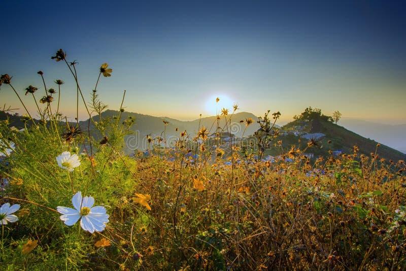 Flores en la montaña Tailandia septentrional imagenes de archivo