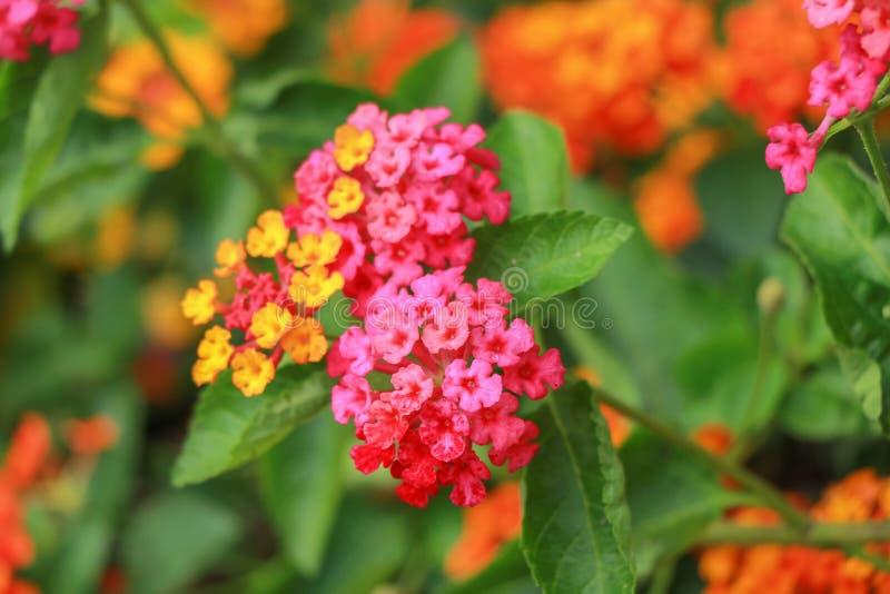 Flores en la naturaleza fotos de archivo