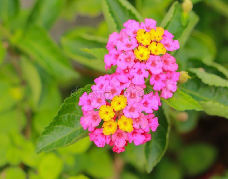 Flores en la naturaleza foto de archivo
