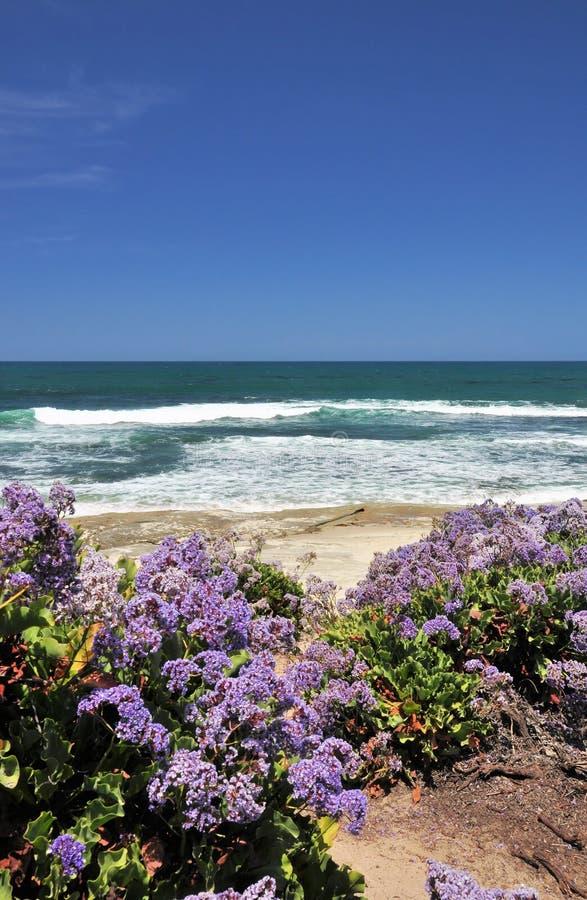 Flores en la playa foto de archivo