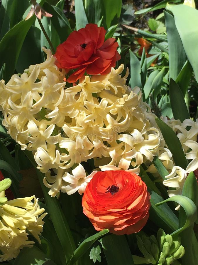 Flores en la plena floraci?n imagenes de archivo