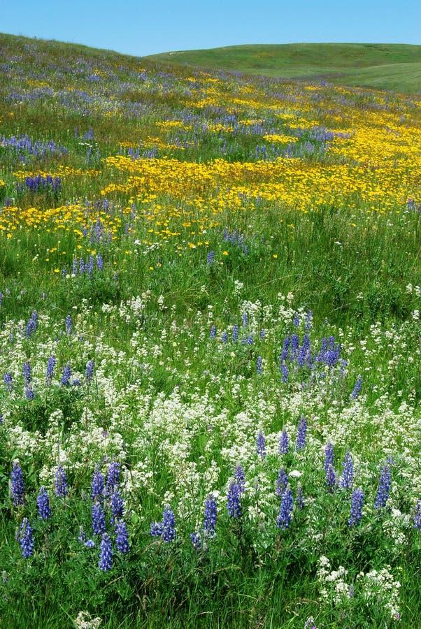 Flores en la pradera de Alberta imagen de archivo