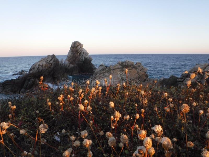 Flores en la puesta del sol 2 fotos de archivo libres de regalías