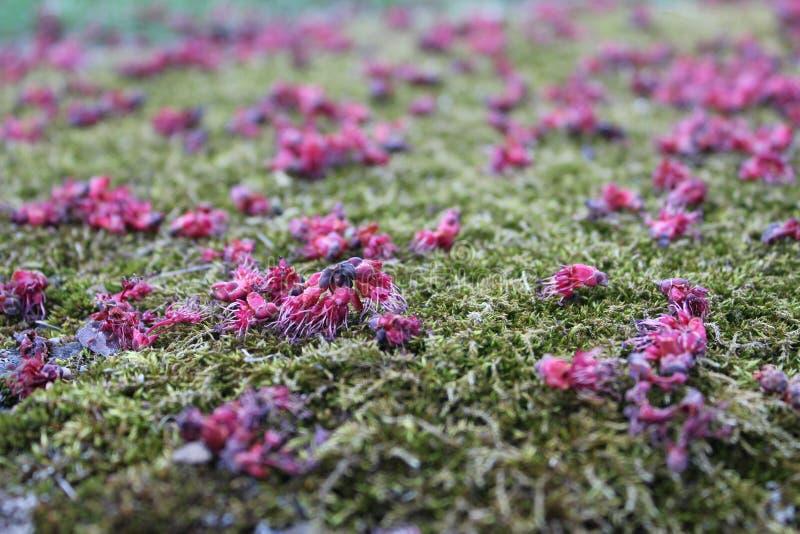 Flores en la tierra imagen de archivo libre de regalías