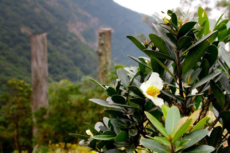 Flores en la trayectoria de la sabiduría imagenes de archivo