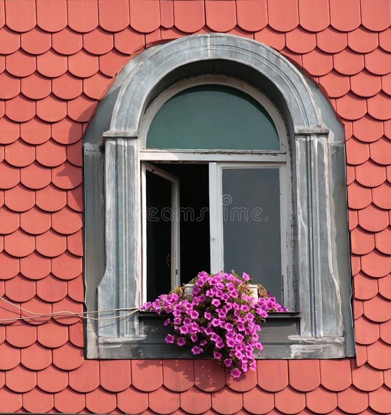 Flores en la ventana fotografía de archivo libre de regalías
