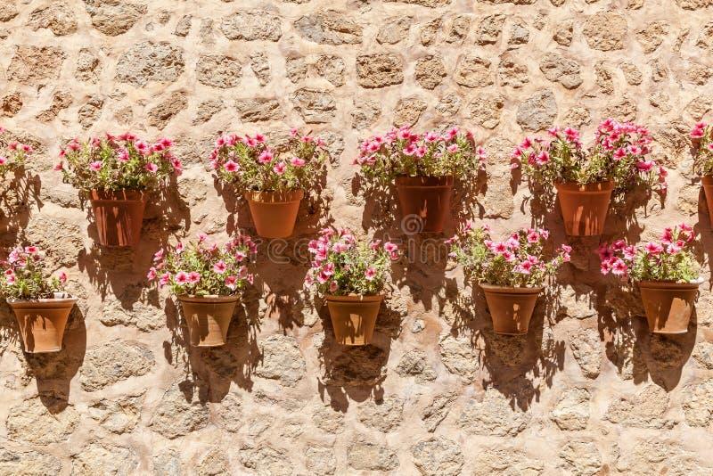 Flores en macetas fotos de archivo libres de regalías